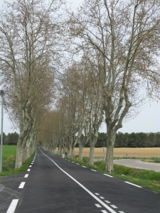 Row of platanes; typical along French national roads.